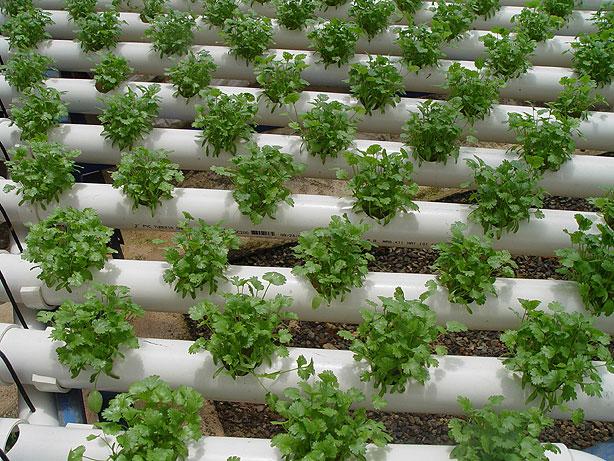 Hidroponia humidificadores for Que es una mesa de cultivo