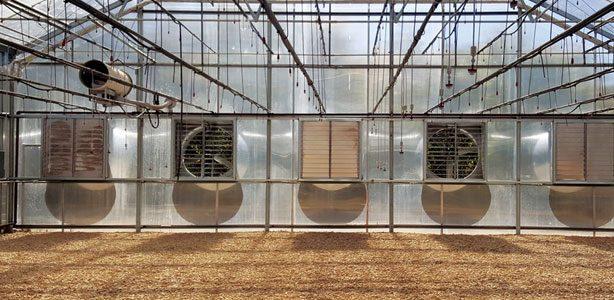 Puntos clave para construir un buen invernadero higroscópico con adecuada humedad y temperatura