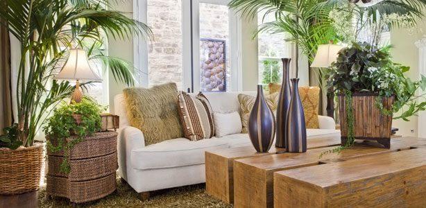 Plantas que ayudan a tener una mejor calidad de aire en casa en armonía del humidificador