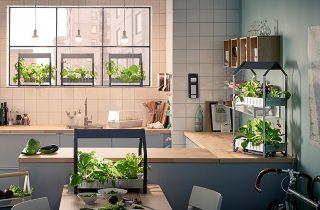Agricultura urbana para mejorar la calidad ambiental y climática de las ciudades y poblados
